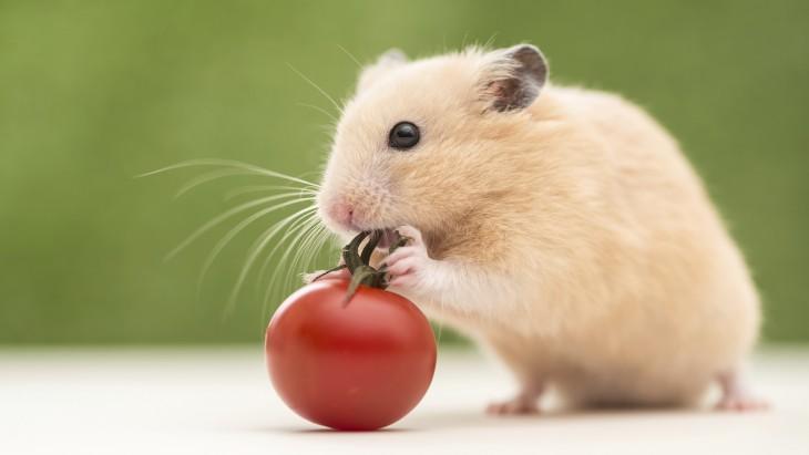 ba ngay lam chuot - Ba ngày làm chuột