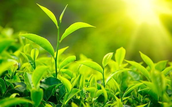 cam nhan bai tho voi vang xuan dieu - MS01 - Cảm nhận về bài thơ Vội vàng của Xuân Diệu