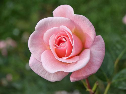 """moi con nguoi moi mot bong hoa - MS37 - Mỗi con người, mỗi một """"bông hoa"""". Cớ việc gì phải """"tỏa hương"""" theo cách mà người ta muốn"""