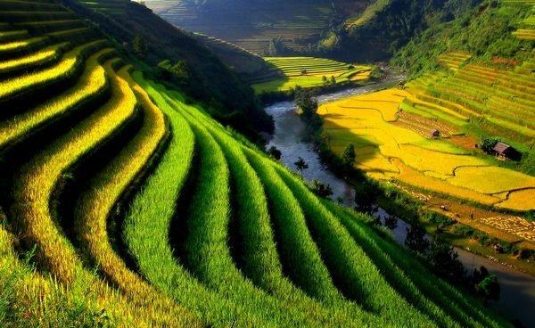 phan tich bac tranh tu binh viet bac - Phân tích bức tranh tứ bình trong bài thơ Việt Bắc của Tố Hữu