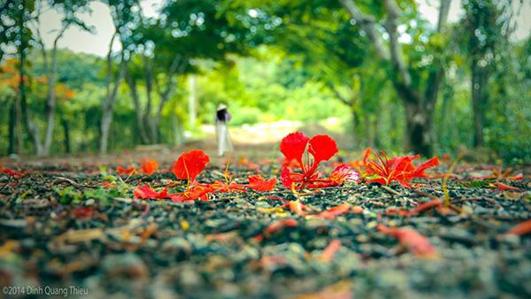 phan tich ve dep nguyen trai - Phân tích vẻ đẹp tâm hồn Nguyễn Trãi qua bài thơ Cảnh ngày hè