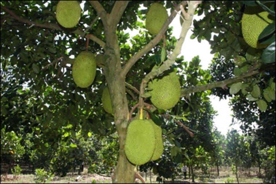 Tả cây ăn quả mà em biết