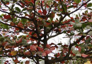 Tả cây bàng theo 4 mùa