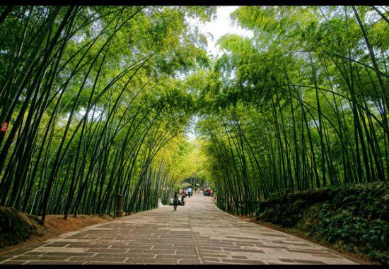 Tả cây tre Việt Nam