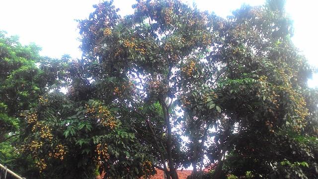 Tả loài cây em yêu lớp 7