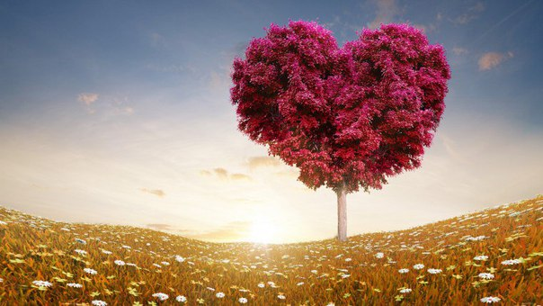 nghi luan xa hoi tinh yeu thuong - MS259 - Nghị luận xã hội về tình yêu thương