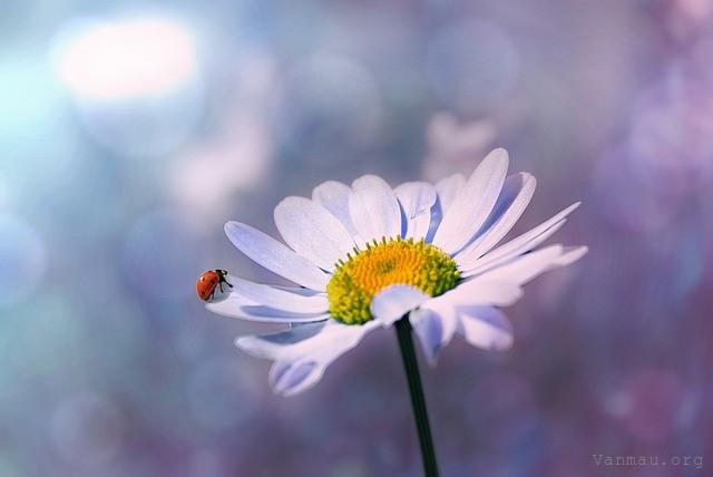 qua tang cuoc song - MS337 – Suy nghĩ về câu nói: Bạn đừng nên chờ đợi những quà tặng bất ngờ của cuộc sống mà hãy tự mình làm nên cuộc sống