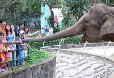 MS478 - Tả chuyến đi thăm vườn thú của em